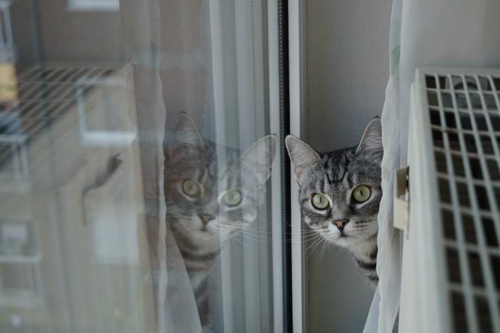 ヒーターの裏を覗く猫