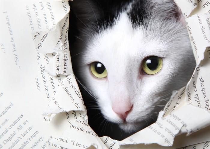 破れた英字新聞から顔を覗かせる猫