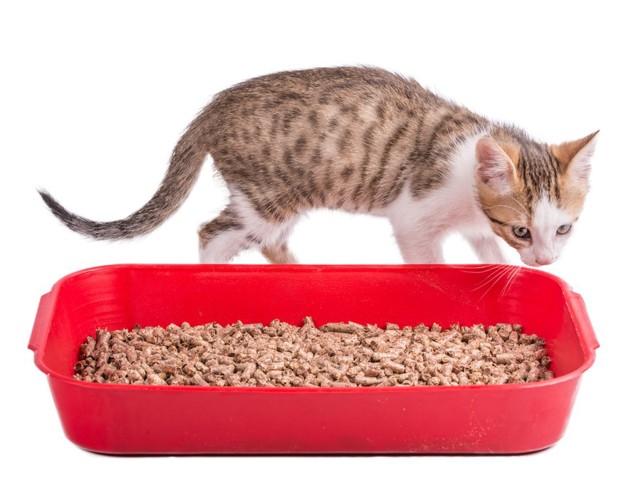 猫と赤いトイレ