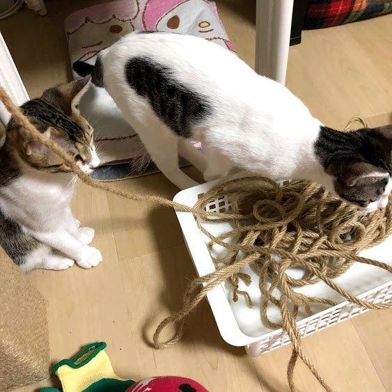 二匹の猫が縄を見ている