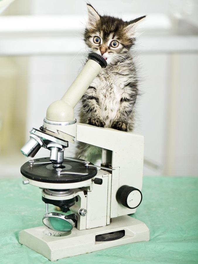 顕微鏡と猫