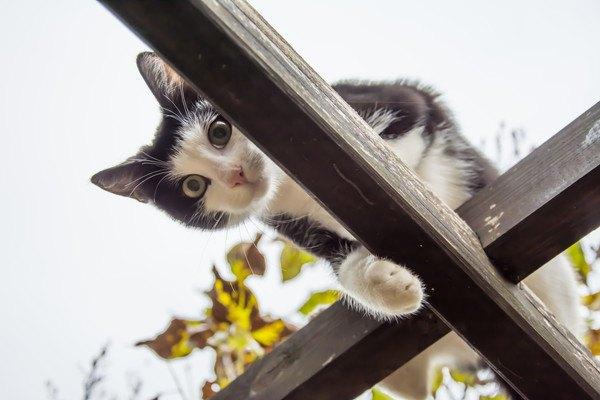 高いところから見下す猫