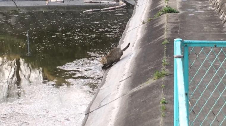 魚にかぶりつく猫