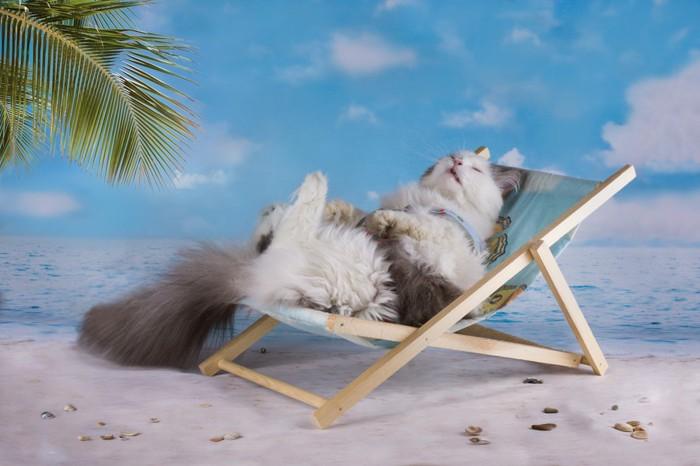 浜辺でくつろぐ猫