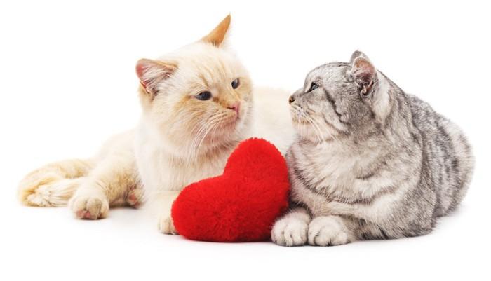 ハートのクッションと見つめ合う二匹の猫