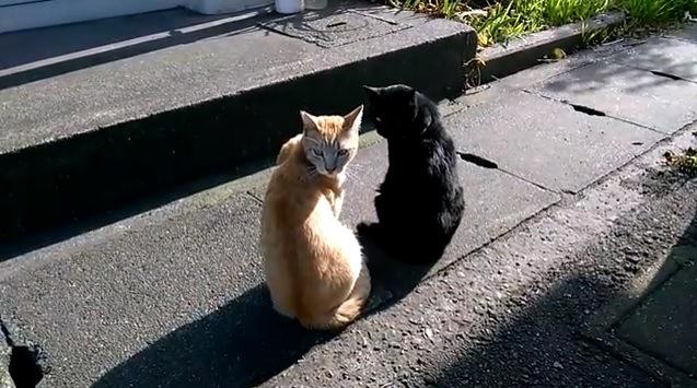 黒猫と茶色の猫