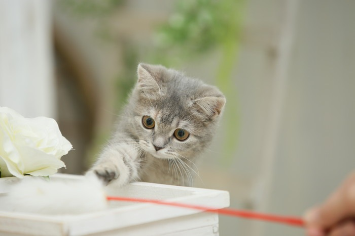 我が家の猫の子猫時代の写真