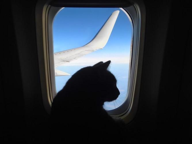 飛行機の窓と猫のシルエット
