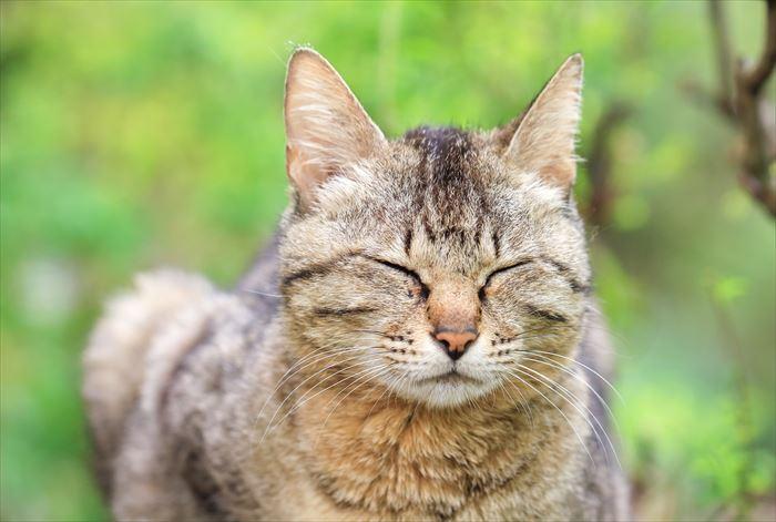 目を閉じた野良猫