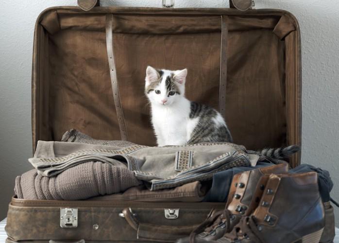 鞄の中に座って悲しげな表情をする子猫