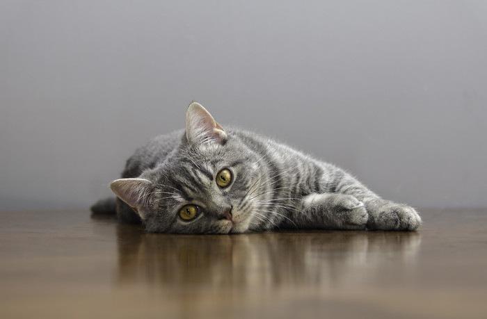 机の上で横たわる猫