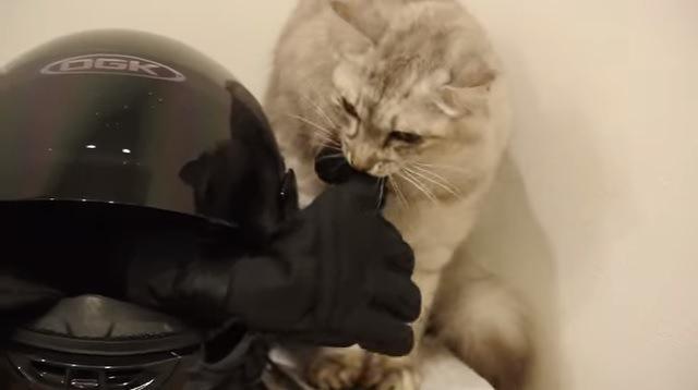 グローブをくわえる猫