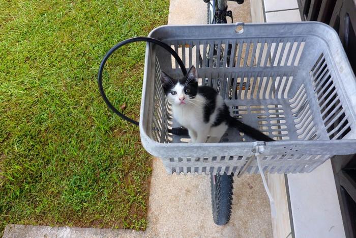 自転車の前かごに入った子猫