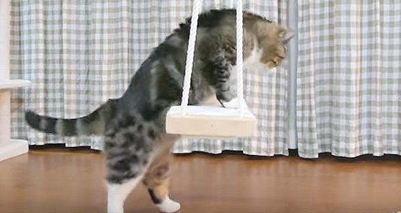 ブランコに前足をかける猫