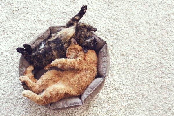 二匹の猫の寝姿