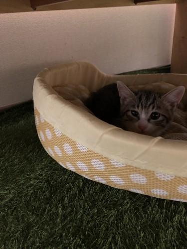机の下の猫