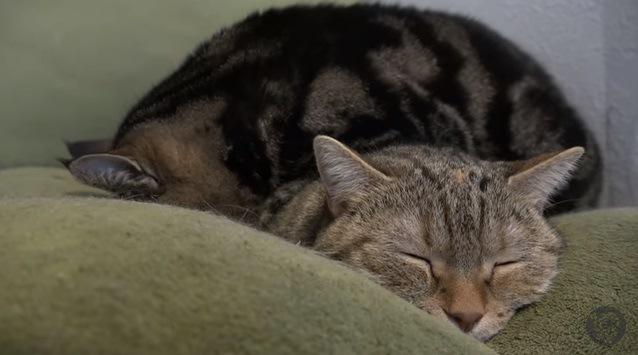 折り重なる2匹の猫