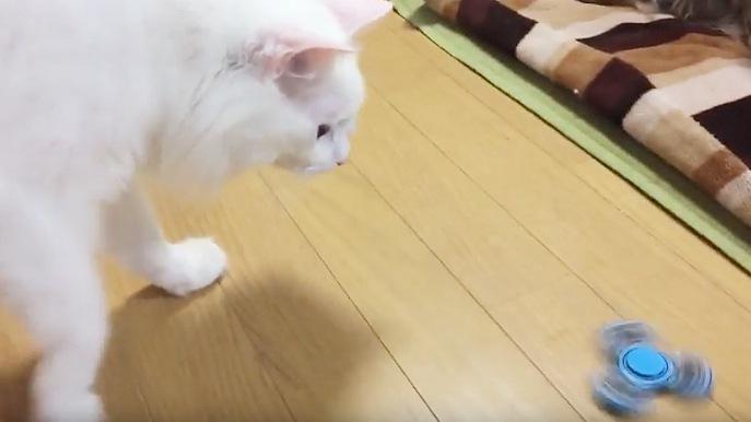 ハンドスピナーが気になる猫