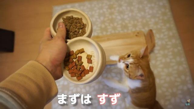 猫にごはんをだす