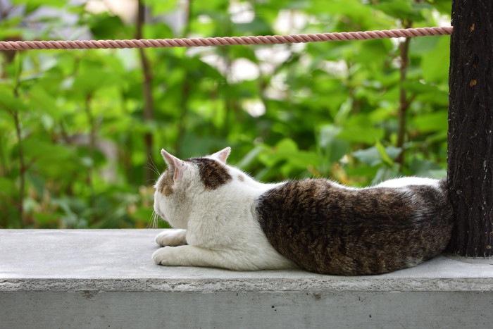 野良猫の後ろ姿の写真