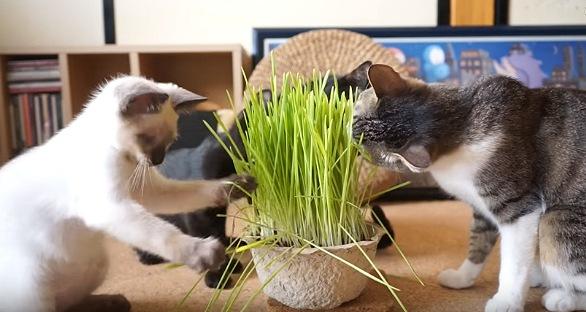 草を前足でいじって遊ぶ子猫