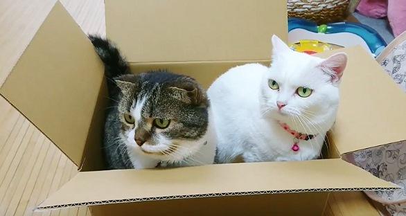 箱に収まる2匹の猫