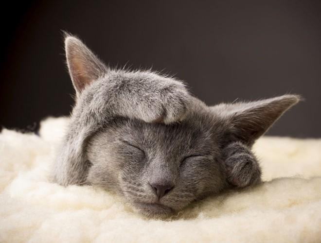 掃除機を嫌がる猫