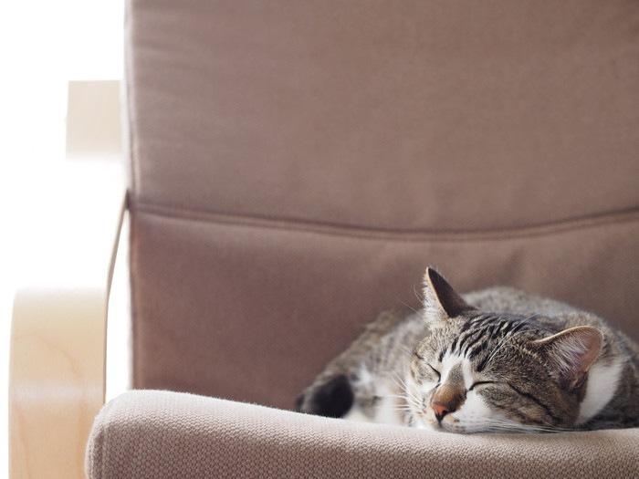 昼寝する猫