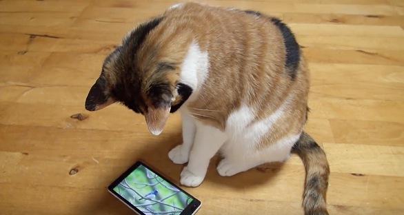 スマホ画面を見つめる三毛猫