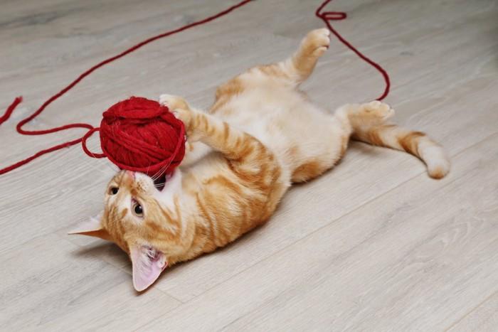 仰向けになって毛糸で遊ぶ猫