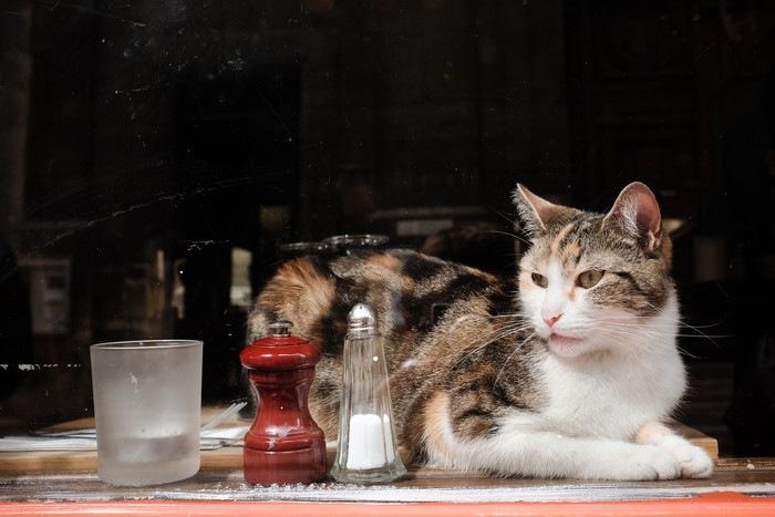 猫と塩とこしょう