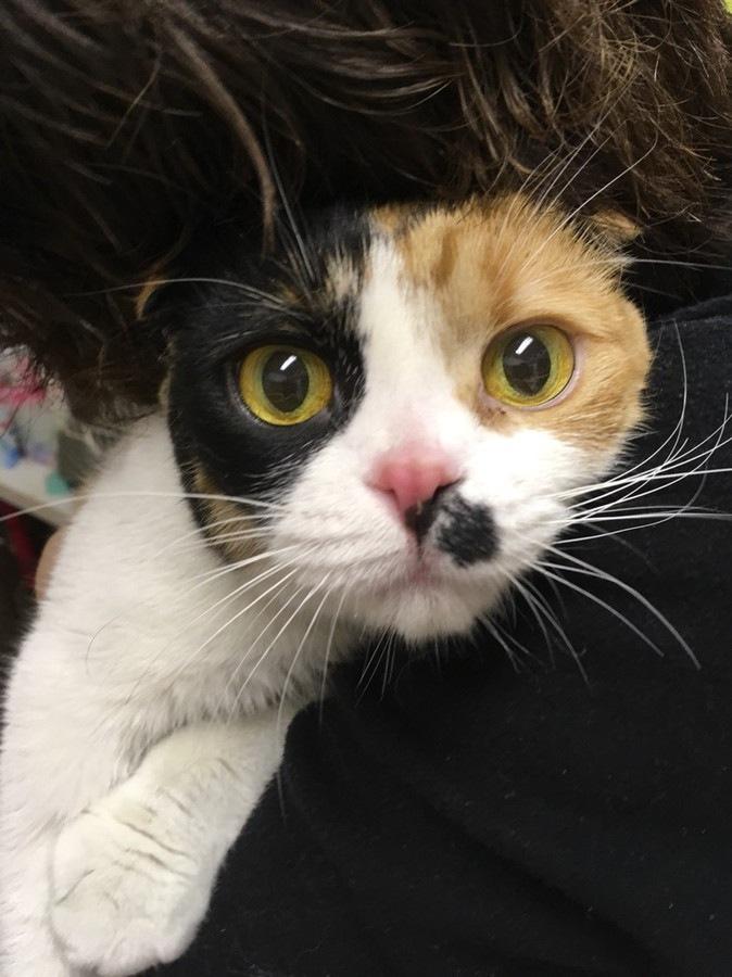アップロード写真16 保護犬カフェ保護猫