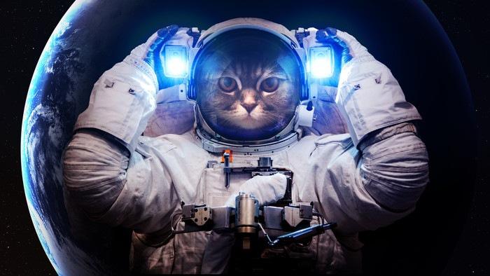 宇宙服を着た猫