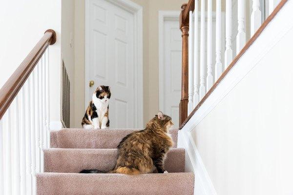 玄関前の二匹
