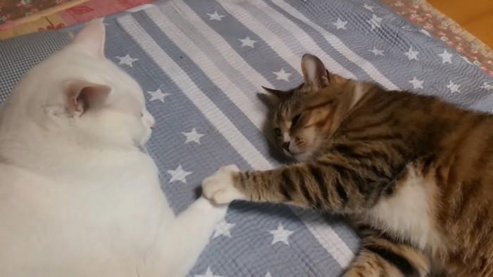 手を添える猫