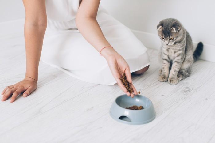 子猫と餌皿