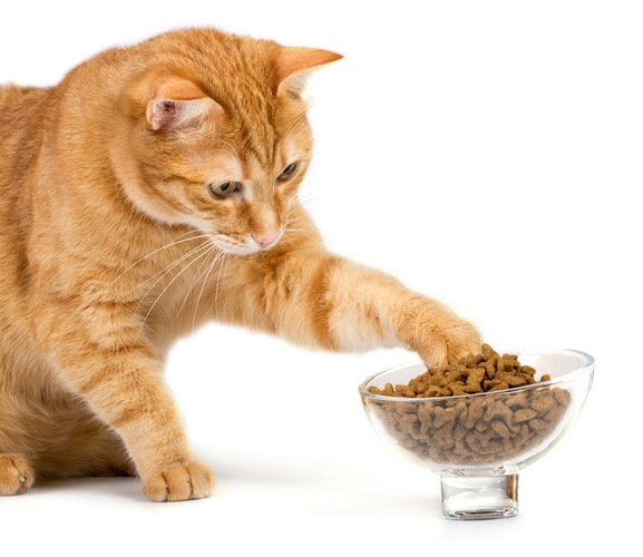 キャットフードの入った器に手を伸ばす茶トラ猫