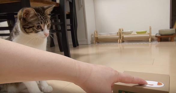 貯金箱に伸びた手を見つめる猫