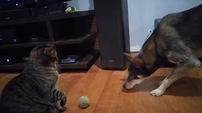 作戦をかえる犬