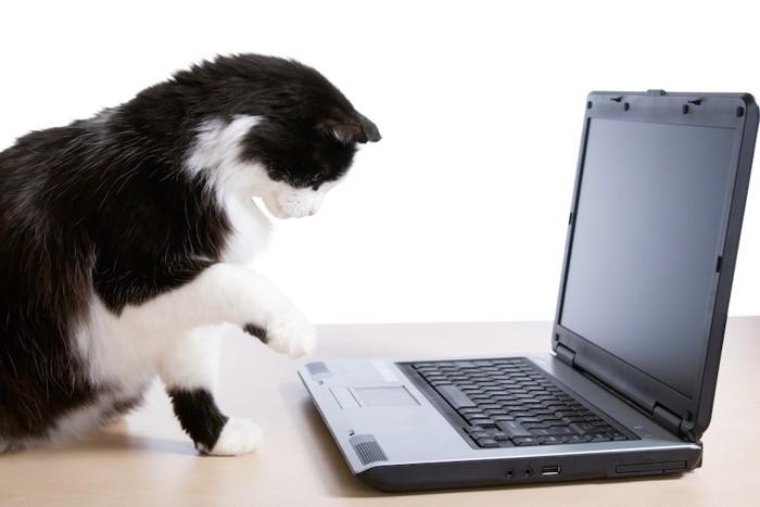 パソコンに興味を持つ猫