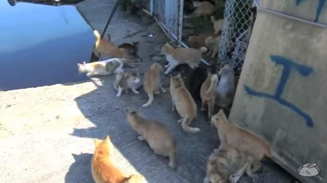 たくさんの猫(右の壁に青く「工」の文字)