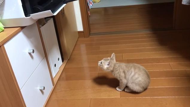 背を丸めて座り込む子猫