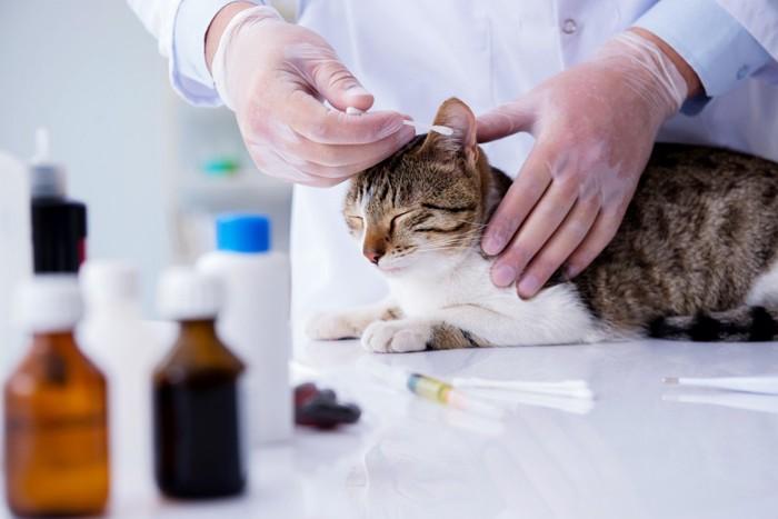 皮膚病の薬を塗ってもらう猫