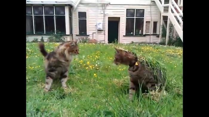 草かでてくる猫