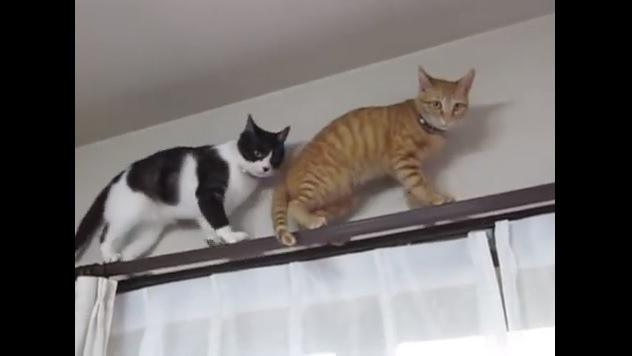カメラ目線の2匹の猫