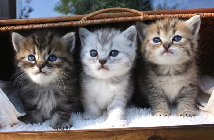 柄が違う3匹の子猫