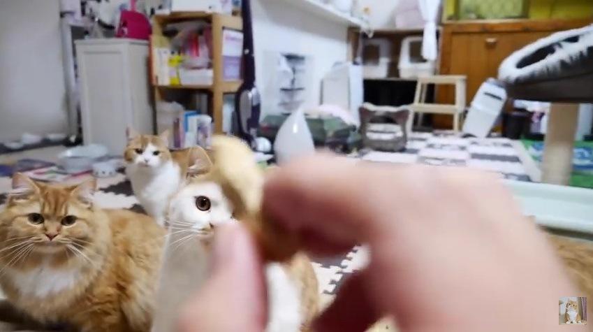 落花生を持つ手を見つめる猫たち