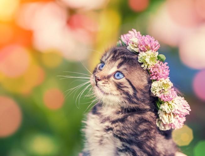 花冠をかぶった子猫