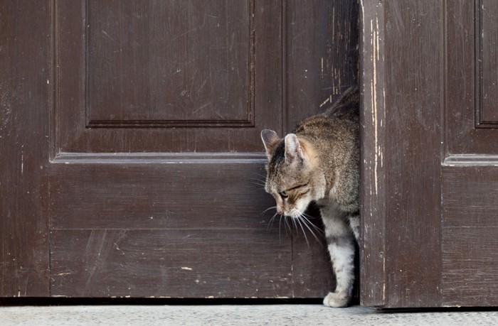 脱走する猫