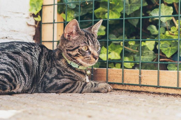 網の柵の前でしゃがむ猫
